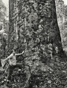 John Halkett with large kauri tree. Big trees put human life into perspective.