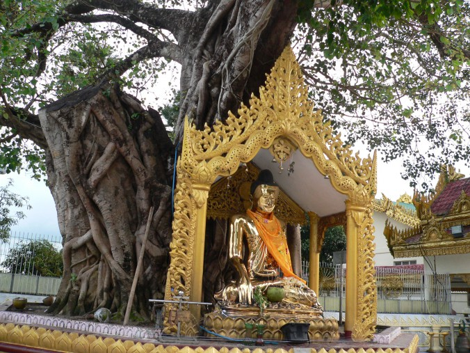 Schwedagon Pagoda, Yangon, Myanmar: trees remain places of reverence and home of the gods.