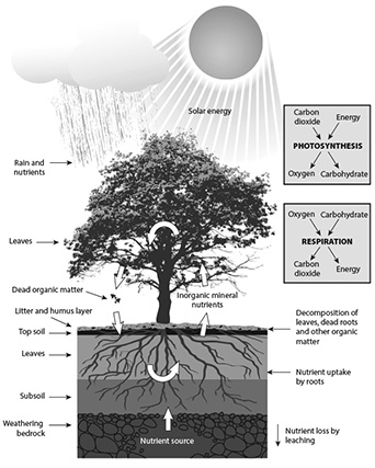 Mineral nutrient cycle.