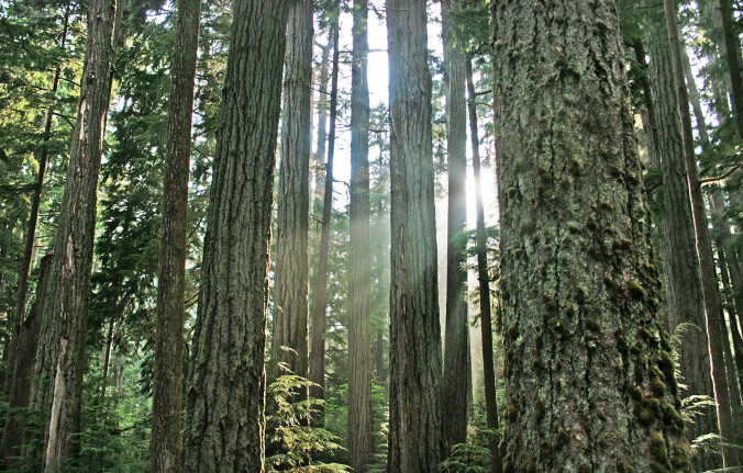 Image of BC coastal temperate forest