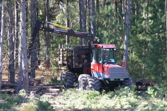 Harvesting radiata pine – blog coming soon.