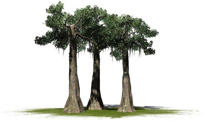 Kapok tree cluster